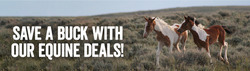 Cars, motorcycles & spares offers in the Farmlands catalogue in Waimate