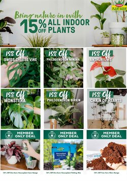 Kings Plant Barn catalogue in Auckland ( 2 days ago )