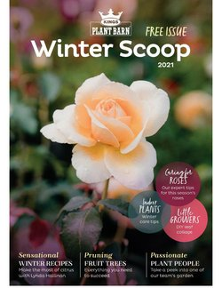 Kings Plant Barn offers in the Kings Plant Barn catalogue ( More than a month)
